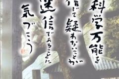 千光寺 ポストカード 椨の大木と西の茶屋